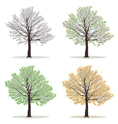 Four seasons trees vector