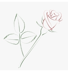 Sketched rose vector image vector image