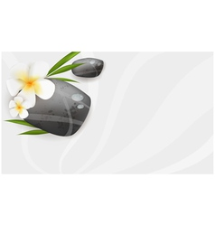 Spa background with stones and flowers vector image
