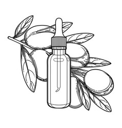 Graphic oil bottle decorated with argan branch vector