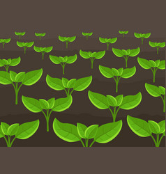 Growing young plant shoots agricultural seedlings vector