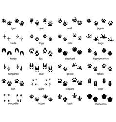 set footprints wild animals vector image