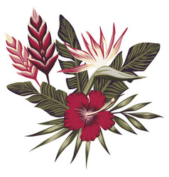tropical composition leaves and flowers vector image