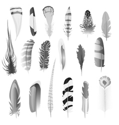 Collection of detailed black and white style bird vector image