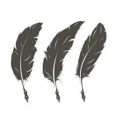 set of three isolated feathers for writing vector image vector image