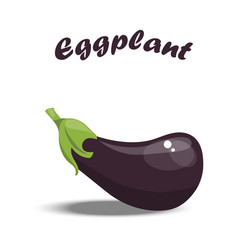 fresh eggplant vector image