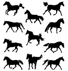 horses3 vector image