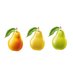 realistic yellow ripe pear healthy food set vector image
