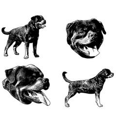 Rottweiler sketch vector