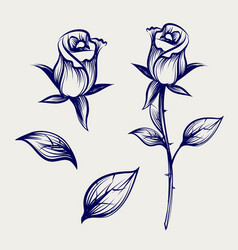 Sketch rose flower bud and leaves vector