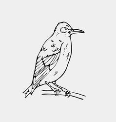 hand-drawn pencil graphics small bird starling vector image vector image