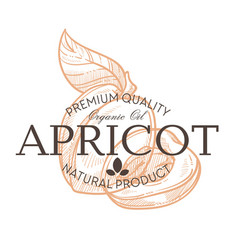 apricot fruit isolated icon with lettering farm vector image