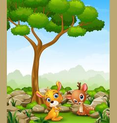Cartoon baby kangaroo with baby deer in the jungle vector