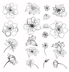 collection daisy flowers for design vector image