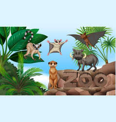 Different types of wild animals in the zoo vector