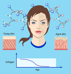 faces and two types of skin - aged and vector image