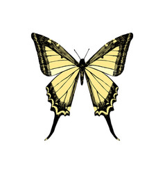 hand drawn yellow swallowtail butterfly vector image