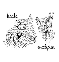 koala eucalyptus vector image