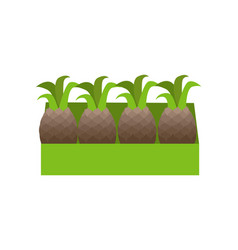 Red pineapples in a box vector