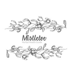 Set of hand drawn botanical sketch mistletoe vector