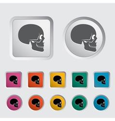 anatomy skull vector image vector image