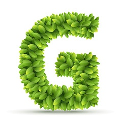 Letter G alphabet of green leaves vector image