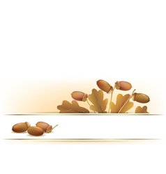 Banner with acorns vector image