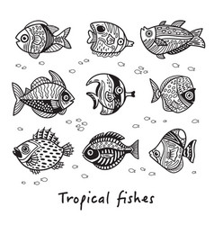 black and white set tropical fishes vector image