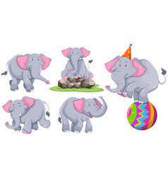 gray elephant in different actions vector image