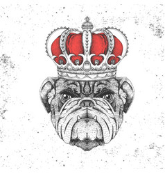 Hipster animal bulldog in crown vector