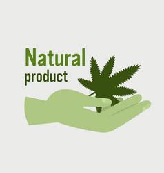 Human hand holding medical cannabis or marijuana vector