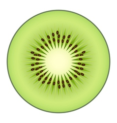 Kiwi fruit isolated on white background vector
