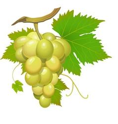 white grape vector image vector image