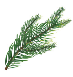 branch of pine vector image