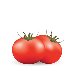 two tomatoes on white background vector image