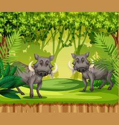 two wild boars in jungle vector image