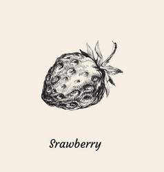 wild strawberry hand drawn vector image