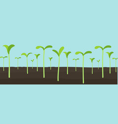 Agricultural seedlings field growing young plant vector