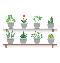 flower pots and shelves set vector image