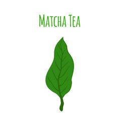 Matcha tea leaf - natural organic plantflat style vector