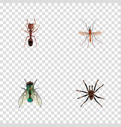 Realistic emmet housefly arachnid and other vector