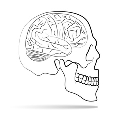 Skull with brain vector