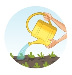 Hands watering a bed in garden with can vector image vector image
