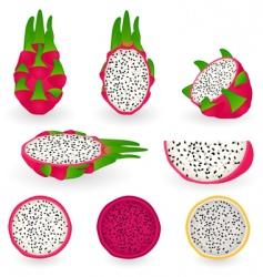 dragon fruit vector image vector image