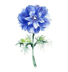 Blue watercolor anemone Beautiful flower vector image