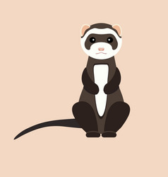 Gray ferret in full growth sits flat vector