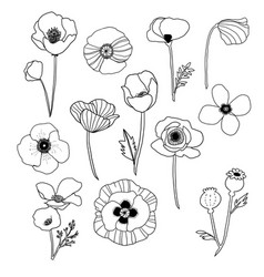 poppies poppy line art clip art vector image