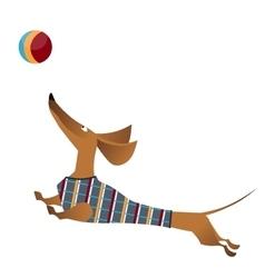 Cartoon of jumping dachshund dog vector image vector image