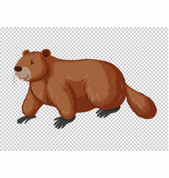 Brown beaver on transparent background vector