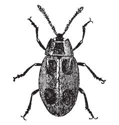 False ladybird vintage vector